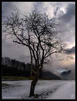 early winter by Zyklotrop