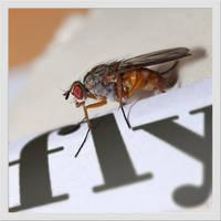 fly by Zyklotrop