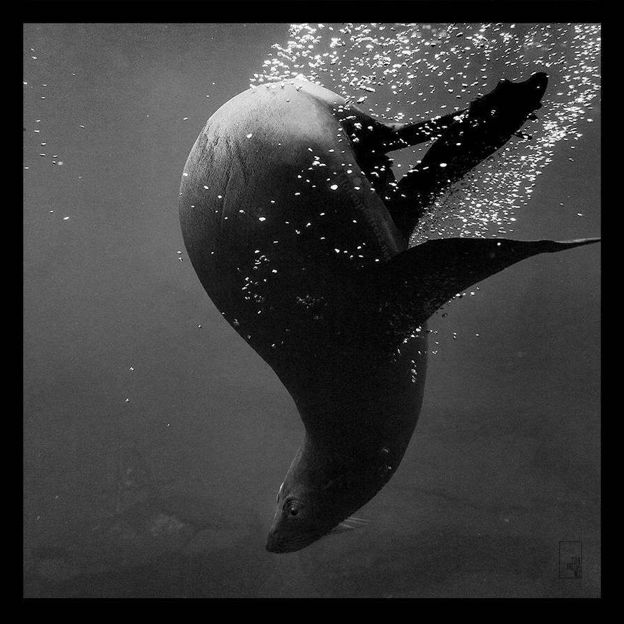 Dive by Zyklotrop