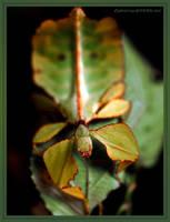 walking leaf by Zyklotrop