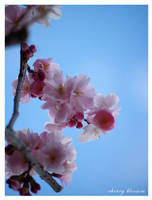 Cherry blossom -print- by Zyklotrop