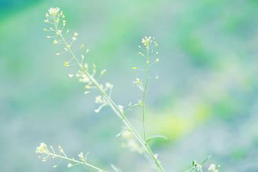 green by hoaxstar