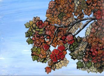 November Maple by Shadsie