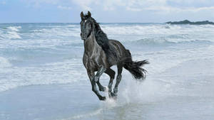 horse running beach by ConfirmedBurger