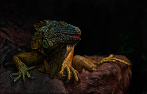 Iguana by ConfirmedBurger