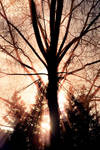 Shine on by RobinHedberg