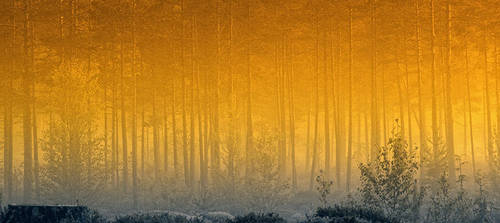 Forest in mist by RobinHedberg