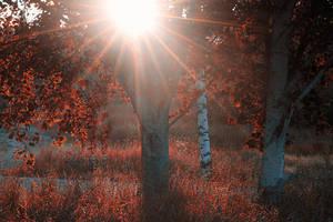Sharp rays by RobinHedberg
