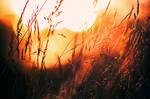 Summer sun II by RobinHedberg