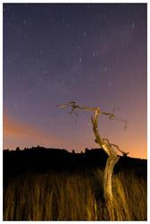 Night tree by deinhard