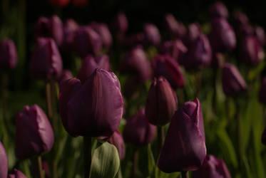 gothic spring by Margotka