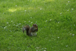 Happy Squirrel by Margotka