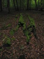 Creeping moss by Margotka