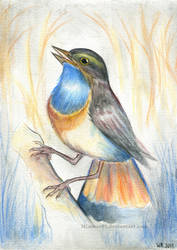Bluethroat by Mimose91