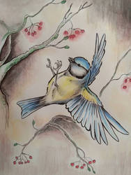 Blue tit by Mimose91
