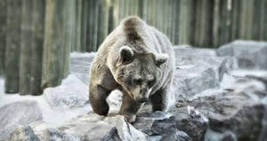 Bear by TheGreenRabbit