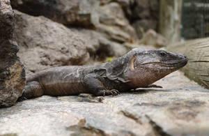 Lizard Stock by TheGreenRabbit