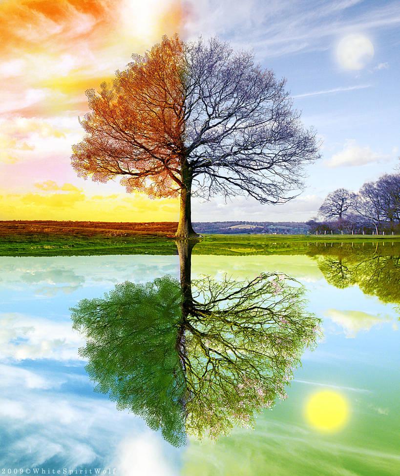 4 Seasons by WhiteSpiritWolf