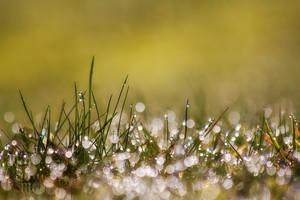 Morning Dew by WhiteSpiritWolf