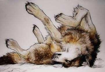 .:Wolf in Snow:. by WhiteSpiritWolf