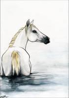.:Water Horse:. by WhiteSpiritWolf