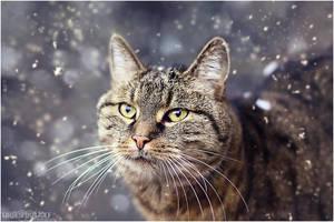.:SnowCat Sladdy:. by WhiteSpiritWolf
