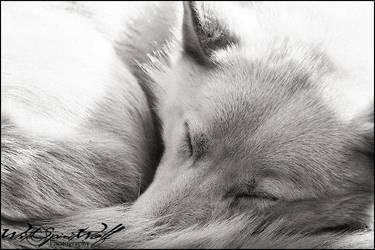 .:sleeping:. by WhiteSpiritWolf