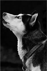 .:Dark Howl:. by WhiteSpiritWolf