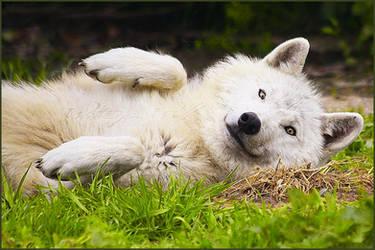 .:I'm that cute:. by WhiteSpiritWolf