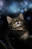 .: Dream of a Kitty :. by WhiteSpiritWolf