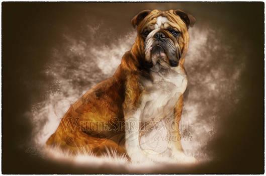 Murphy .:. the english bulldog by WhiteSpiritWolf