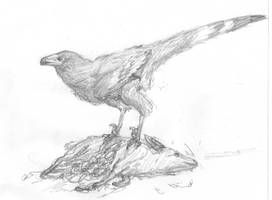 Gypsiform troodontid by povorot