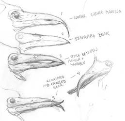 Beak Variation by povorot