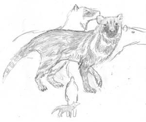 Civet-dog by povorot