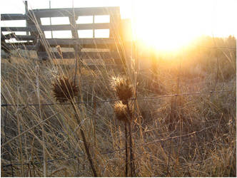 Sunset Bliss by tymonn