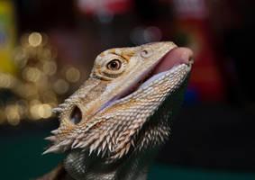 The cutest Bearded dragon ever by alfaromeogirl