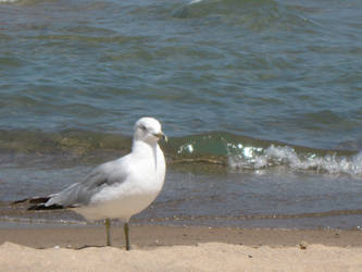 Seagull on the beach by totoro7-11