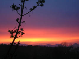 Sunrise in Washington by iluvpics2
