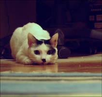 Kitty by VesnaSvesna