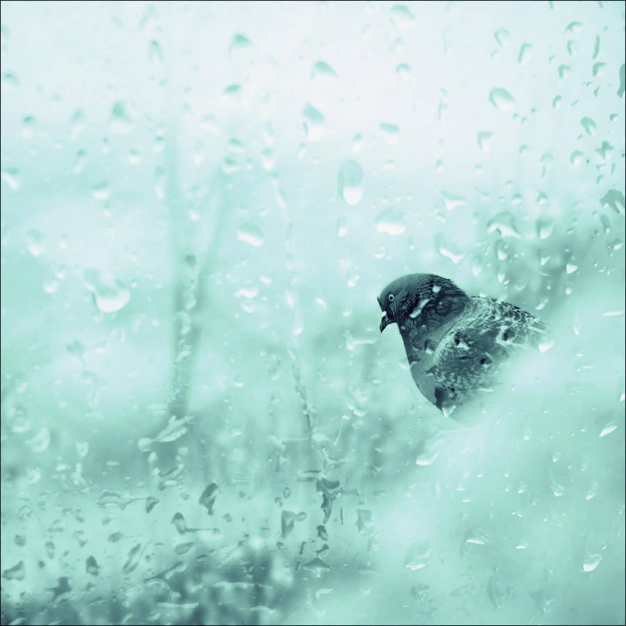 Cold morning 02 by VesnaSvesna