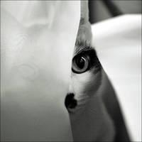 little spy by VesnaSvesna