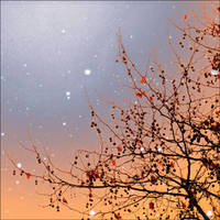 snowflakes magic by VesnaSvesna