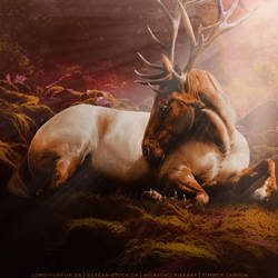 HEE Horse Avatar | Stagnant Dreams by iAlissa