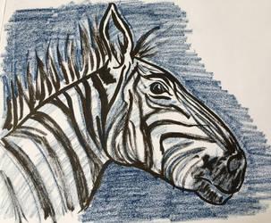 Zebra by AKikkaKikka