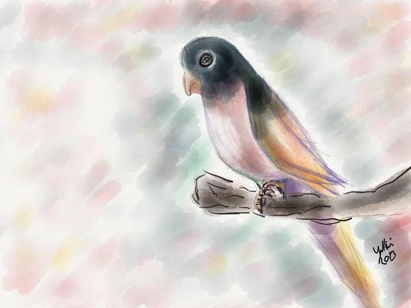 Pinky Birdy by yetkin