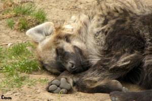 Sleeping Spotty by RHCP-Cream