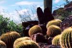 Desert Botanical 1 by reydoo