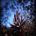 Burning Bush by reydoo
