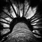 Desert Palm by reydoo