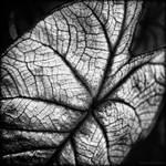 A New Leaf by reydoo
